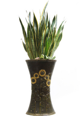 공기정화식물 > 산세베리아 > 산세베리아24