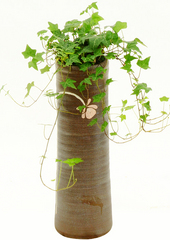 공기정화식물 > 아이비1