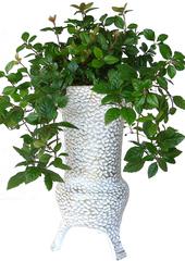 공기정화식물 > 산호수4